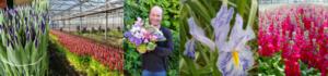 Dutch Floral Adventure