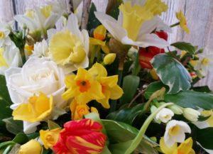 RHS Cardiff Flower Show