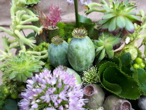 Workshop – Structures & Succulents, Foliages and Frames